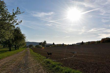 Aponi und Rabe im Frühlingsfeld (Foto: Martin Dühning)