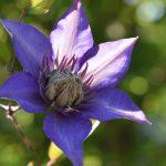 Blumenfotos zur Maienzeit
