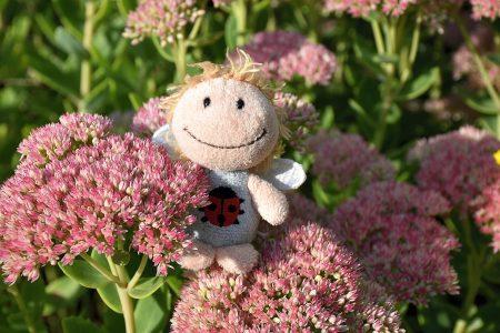 So manche Zwergfee freut sich am Blumenmeer (Foto: Martin Dühning).