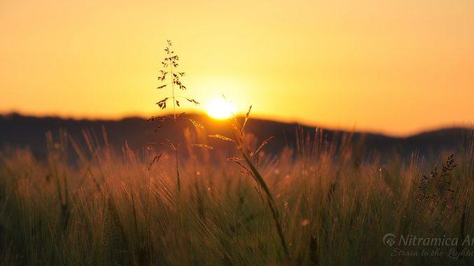 Mittsommerlicher Sonnenuntergang (Foto: Martin Dühning)