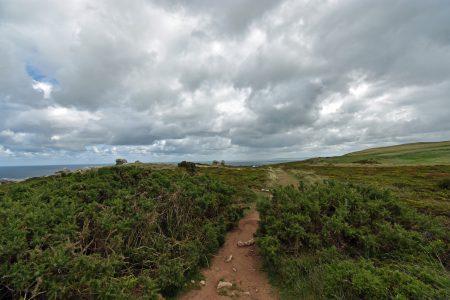 Pfad durch Heidekraut und Steine Richtung Süden auf dem Great Orme (Foto: Martin Dühning)