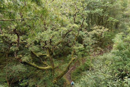 Blick auf die Waldlandschaft mit abenteuerlichen Wanderpfaden (Foto: Martin Dühning)