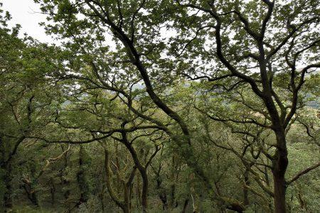 Dichte, moosbewachsene Wälder in den Bergen nördlich von Minffordd (Foto: Martin Dühning)