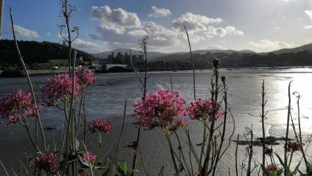 Blick von den Uferpromenaden Richtung Conwy (Foto: Martin Dühning)