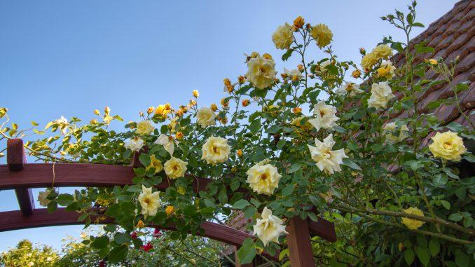 Rosige Ansichten am neuen Gartentor (Foto: Martin Dühning)