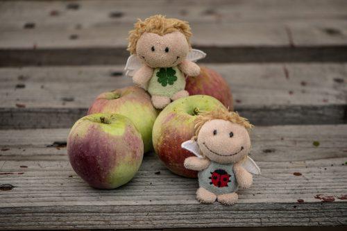 Die Apfelernte 2019 fällt überaus überschaubar aus (Foto: Martin Dühning).