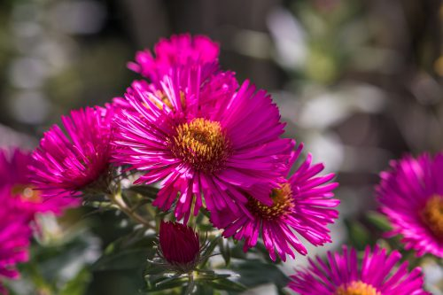 Pink flowers (Foto: Martin Dühning)