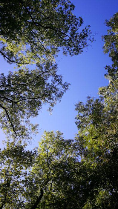 Zartes Waldgrünen bei Waldshut (Foto: Martin Dühning)