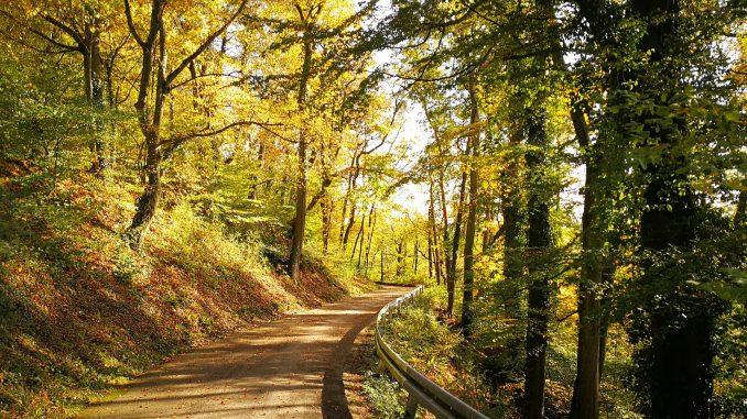Der Aarberg in Waldshut im Oktobergold 2019 (Foto: Martin Dühning)