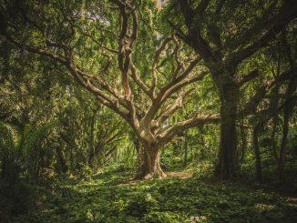Green Leafed Tree (Foto: Veeterzy über Pexels)