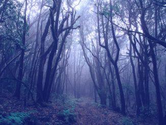 Wald im Nebel (Foto: Francesco Ungaro via Pexels)