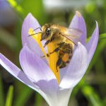 Erste Frühlingsbilder