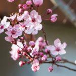 Frühlingshaftes Zuhause