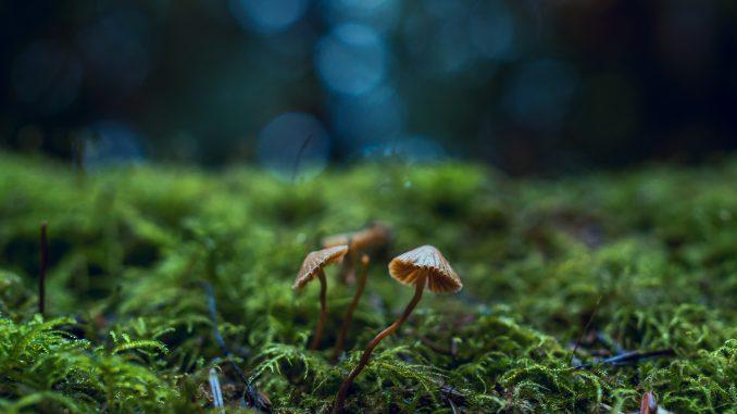 Zauberwald-Pilze (Foto: Chris Gonzalos via Pexels)