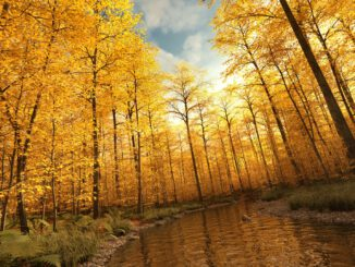 Goldener Herbstwald (Grafik: Martin Dühning)