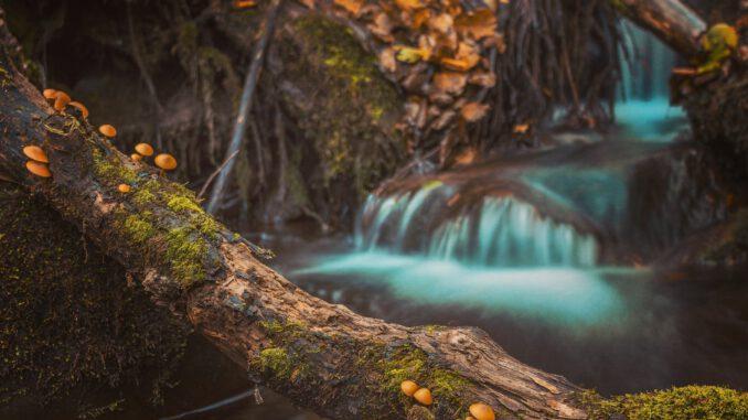 Mushrooms on Log (Foto: Aleksa Kalajdzic via Pexels)