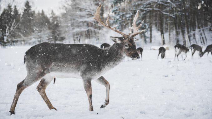 """""""Deers"""" (Foto: Annika Thierfeld via Pexels)"""