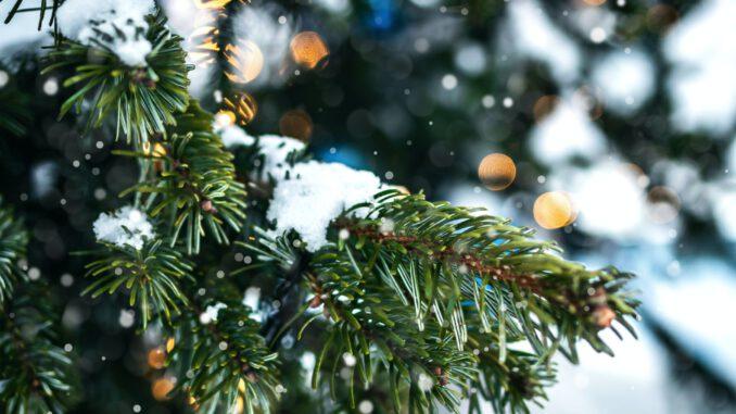 Weihnachtliche Zweige (Foto: Artem Beliaikin via Pexels)