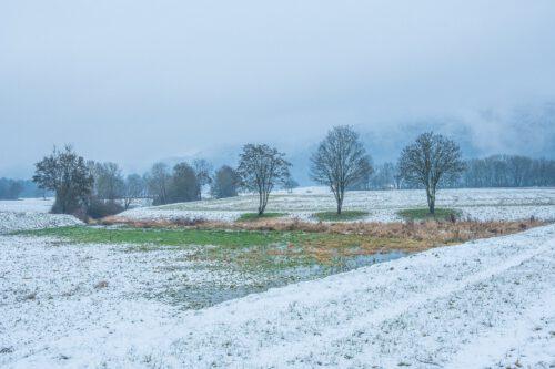 Winterliche Bäume am Klingengraben (Foto: Martin Dühning)