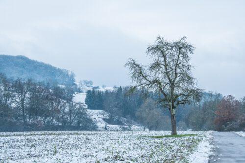 Mein alter Lieblingsbirnbaum steht noch (Foto: Martin Dühning).